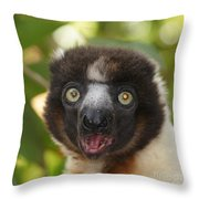 portrait of a sifaka from Madagascar Throw Pillow