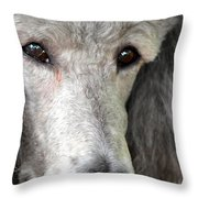 Portrait Of A Silver Poodle Throw Pillow