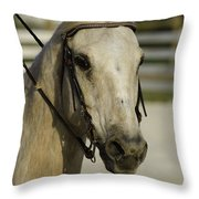 Portrait Of A Tan Horse Throw Pillow