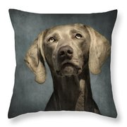 Portrait Of A Weimaraner Dog Throw Pillow by Wolf Shadow  Photography