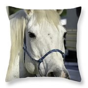 Portrait Of A White Horse Throw Pillow