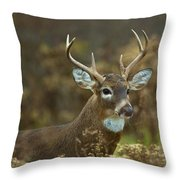 Portrait Of A White Tailed Buck Throw Pillow