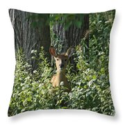 Portrait Of A Whitetail Fawn II Throw Pillow