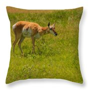 Portrait Of A Young Pronghorn Throw Pillow
