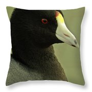 Portrait Of An American Coot Throw Pillow
