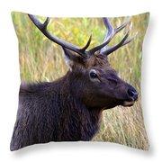 Portrait Of An Elk Throw Pillow