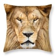 Portrait Of Beautiful African Lion Throw Pillow