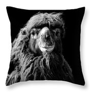 Portrait Of Camel In Black And White Throw Pillow