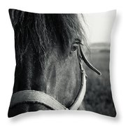 Portrait Of Horse In Black And White Throw Pillow