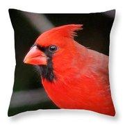 Portrait Of Male Cardinal Throw Pillow