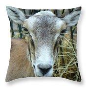 Portrait Of Mouflon Ewe Throw Pillow