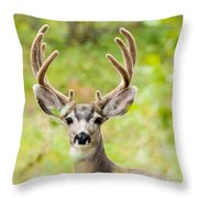 Portrait Of Mule Deer Buck With Velvet Antler  Throw Pillow