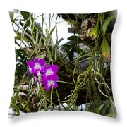 Portrait Of Orchids Throw Pillow