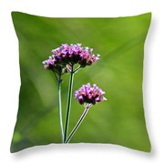 Portrait Of Purple Verbena Throw Pillow