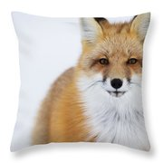 Portrait Of Red Foxchurchill Manitoba Throw Pillow