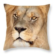 Portrait Of The Lion Throw Pillow