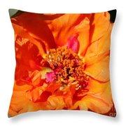 Portulaca Named Sundial Tangerine Throw Pillow
