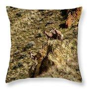Posing Bighorn Sheep Throw Pillow