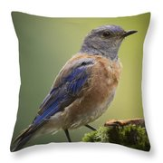 Posing Bluebird Throw Pillow