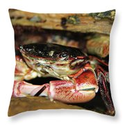 Posing Crab Throw Pillow