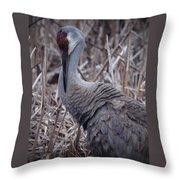 Posing Sandhill Crane Throw Pillow