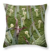 Potato Leaf Sem Throw Pillow