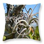 Potbelly Airplant Throw Pillow