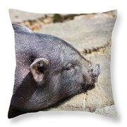 Potbelly Pig Throw Pillow