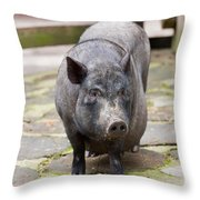Potbelly Pig Standing Throw Pillow