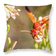Potter Wasp Female Throw Pillow