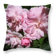 Powder Puff Pink Throw Pillow