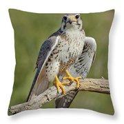 Praire Falcon On Dead Branch Throw Pillow
