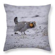 Prairie Chicken 2013-2 Throw Pillow