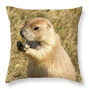 Prairie Dog Feeding On The Meadows At The Devil's Tower Throw Pillow