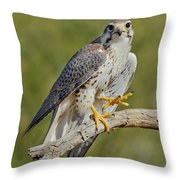 Prairie Falcon Throw Pillow