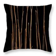 Prairie Grass Number 3 Throw Pillow