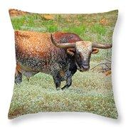 Prairie Longhorn Throw Pillow