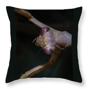 Praying Mantis 3 Throw Pillow