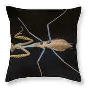 Praying Mantis 4 Throw Pillow