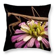 Praying Mantis On Zinnia Throw Pillow