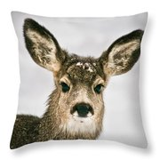 Precious - Mule Deer Fawn - Casper Mountain - Casper Wyoming Throw Pillow