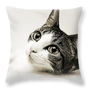 Precious Kitty Throw Pillow by Andee Design