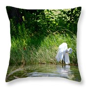 Preening In Tranquil Sunlight Throw Pillow