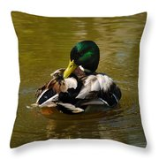 Preening Mallard Throw Pillow