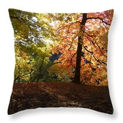 Preserve Trails In Fall Three Throw Pillow