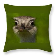 Pretty Bird I Throw Pillow