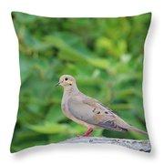 Pretty Dove Throw Pillow
