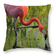 Pretty Flamingo Throw Pillow
