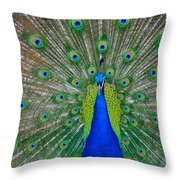 Pretty Peacock Throw Pillow