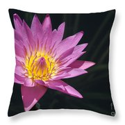 Pretty Pink And Yellow Water Lily Throw Pillow